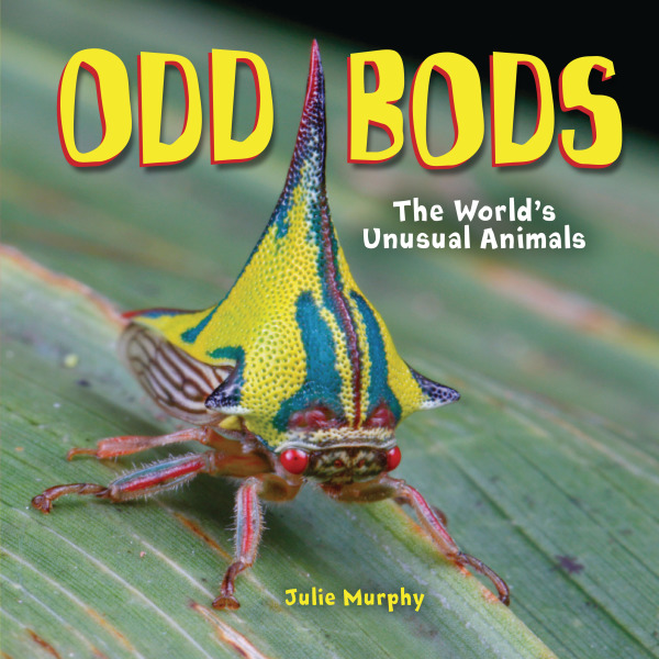 Cover image of Odd Bods by Julie Murphy